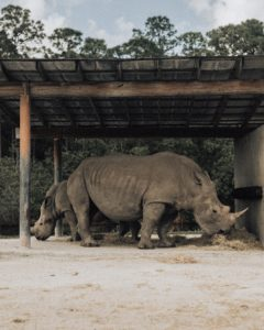 rhinoceros on brown wooden cage